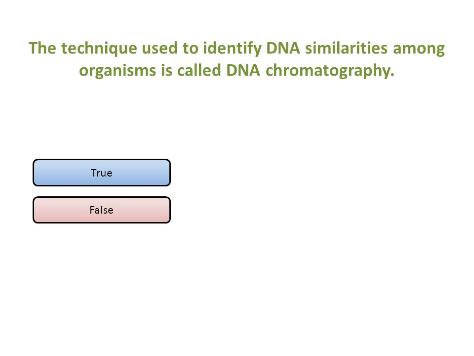 The technique used to identify DNA similarities among organisms is called DNA chromatography.