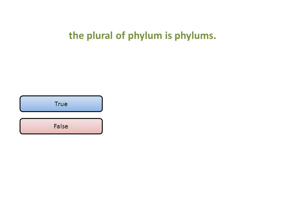 the plural of phylum is phylums.