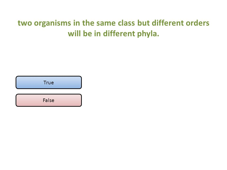 two organisms in the same class but different orders will be in different phyla.