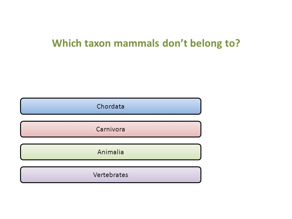 Which taxon mammals don't belong to
