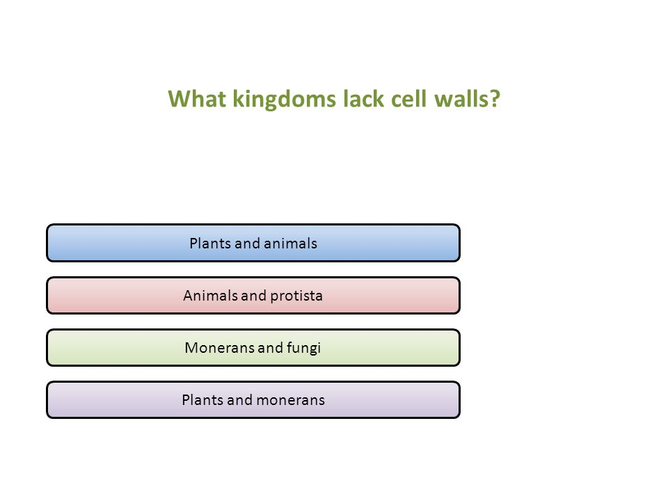 What kingdoms lack cell walls