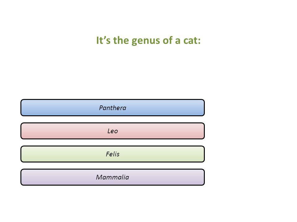 It's the genus of a cat: Panthera Leo Felis Mammalia