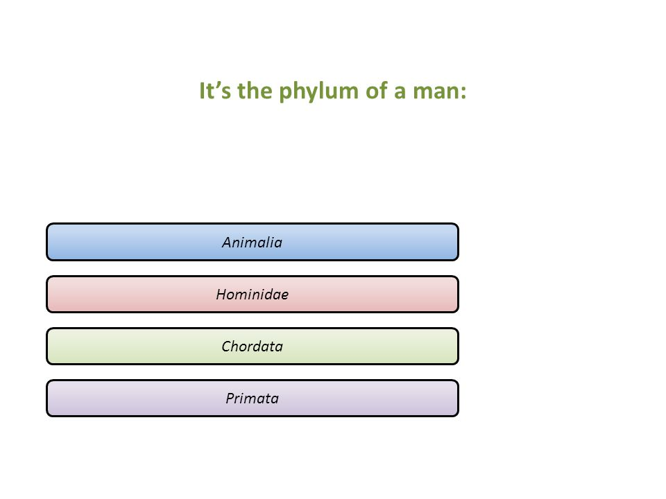 It's the phylum of a man: