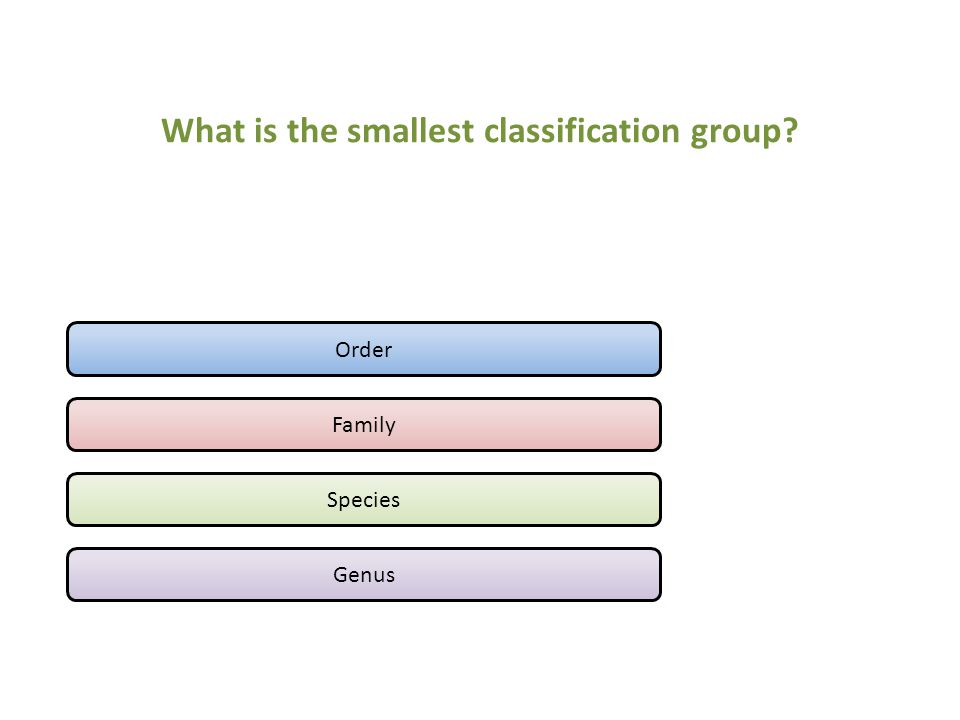 What is the smallest classification group