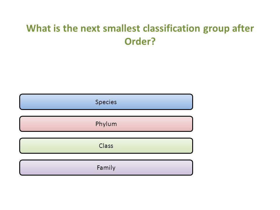 What is the next smallest classification group after Order