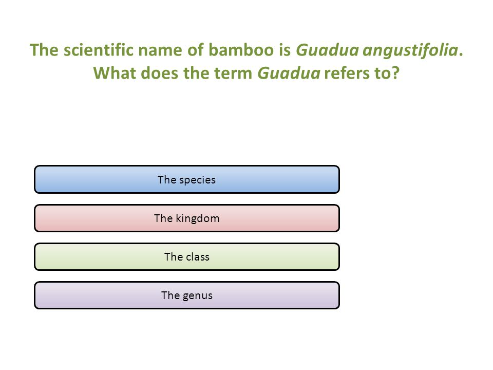 The scientific name of bamboo is Guadua angustifolia