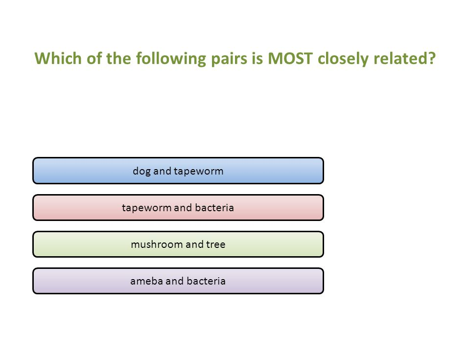 Which of the following pairs is MOST closely related