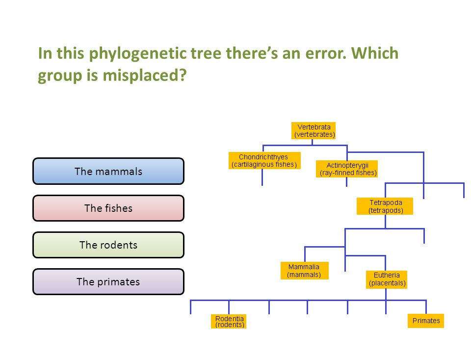 In this phylogenetic tree there's an error. Which group is misplaced