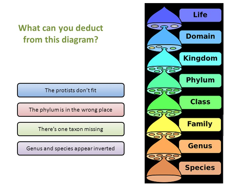 What can you deduct from this diagram