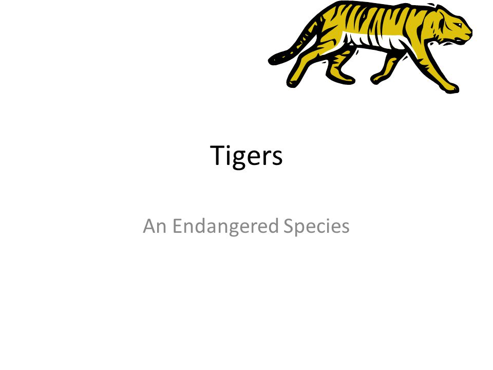 Tigers An Endangered Species