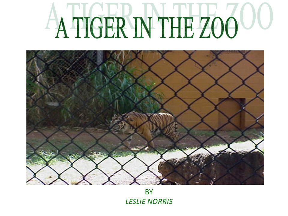 A TIGER IN THE ZOO BY LESLIE NORRIS