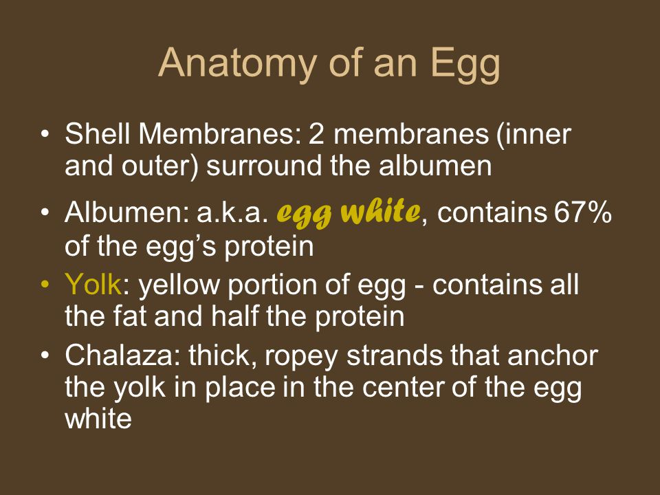 Anatomy of an Egg Shell Membranes: 2 membranes (inner and outer) surround the albumen. Albumen: a.k.a. egg white, contains 67% of the egg's protein.