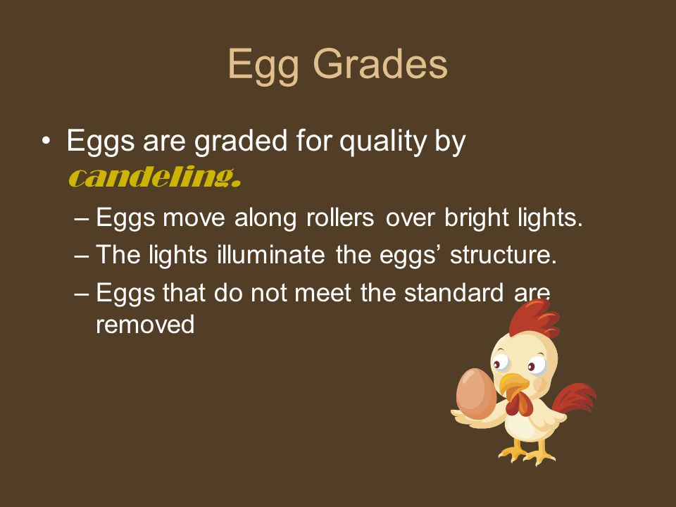 Egg Grades Eggs are graded for quality by candeling.