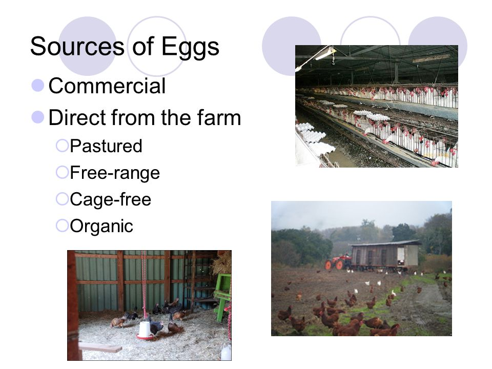 Sources of Eggs Commercial Direct from the farm Pastured Free-range