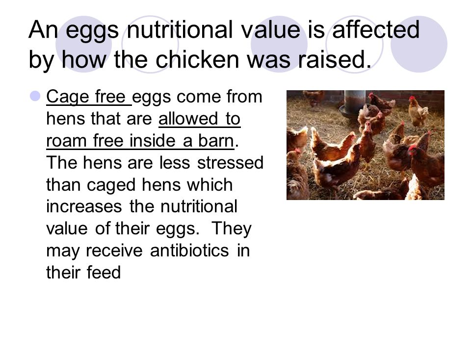 An eggs nutritional value is affected by how the chicken was raised.