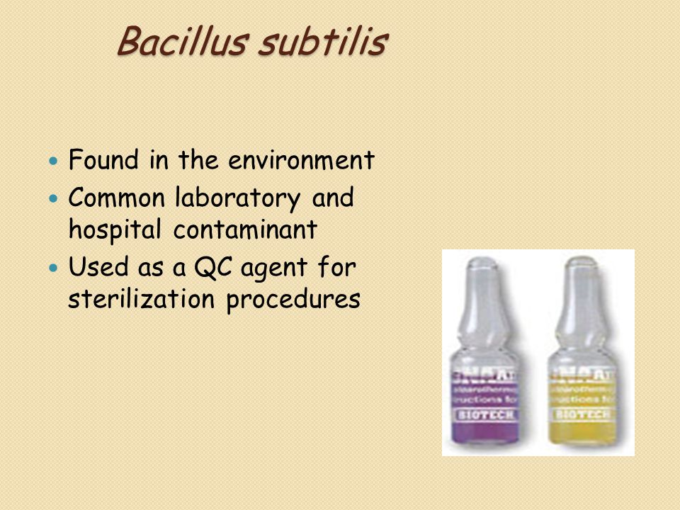 Bacillus subtilis Found in the environment