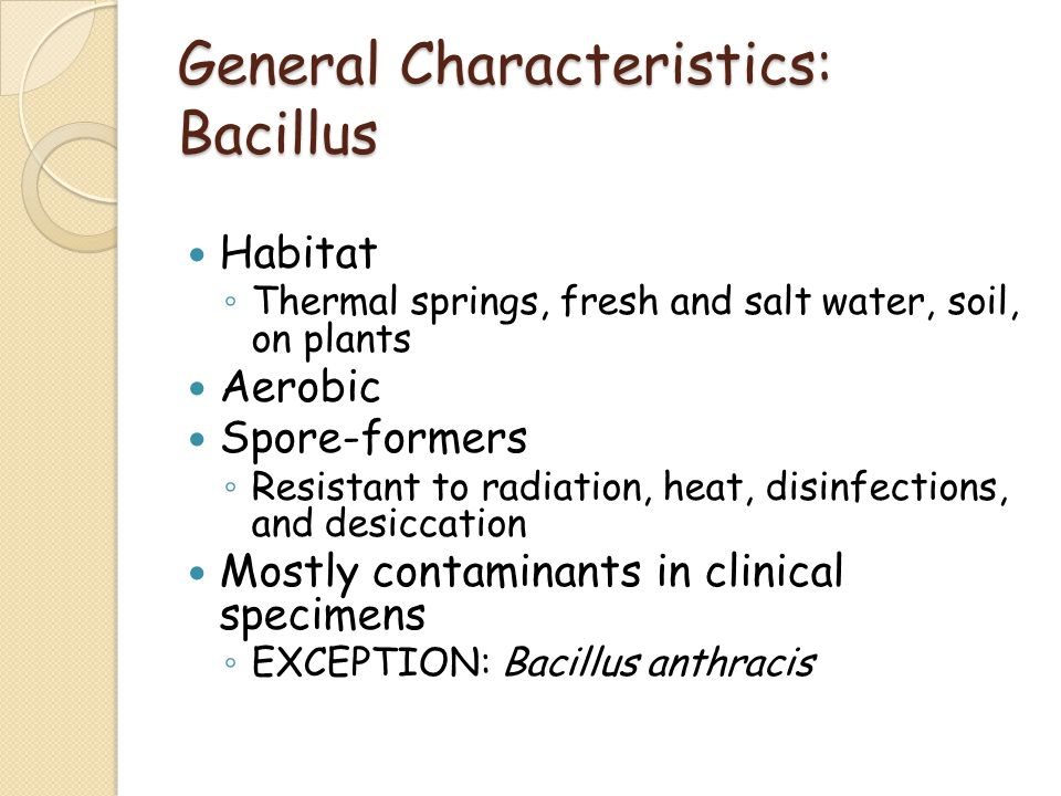 General Characteristics: Bacillus
