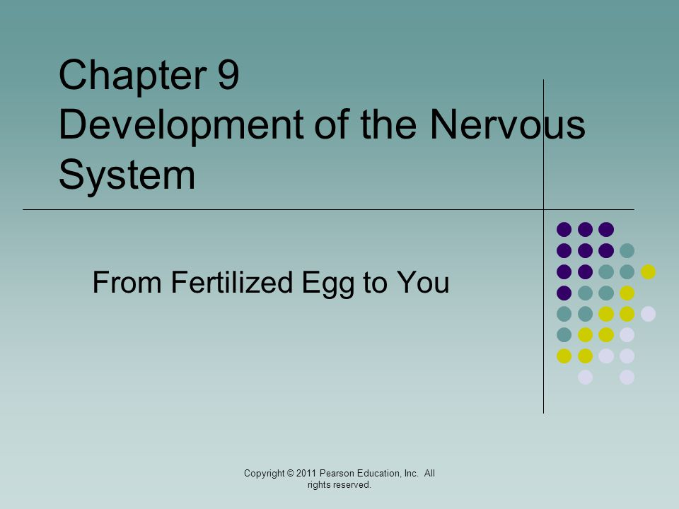 From Fertilized Egg to You
