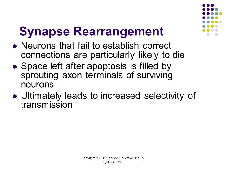 Synapse Rearrangement
