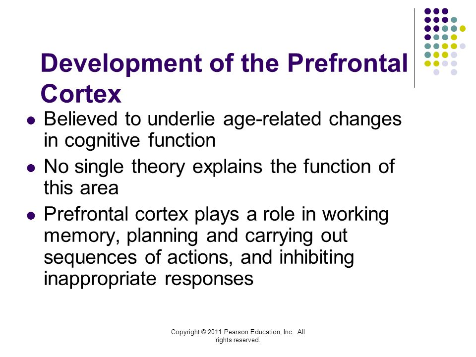 Development of the Prefrontal Cortex
