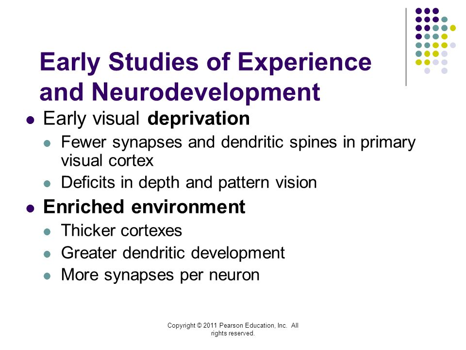 Early Studies of Experience and Neurodevelopment