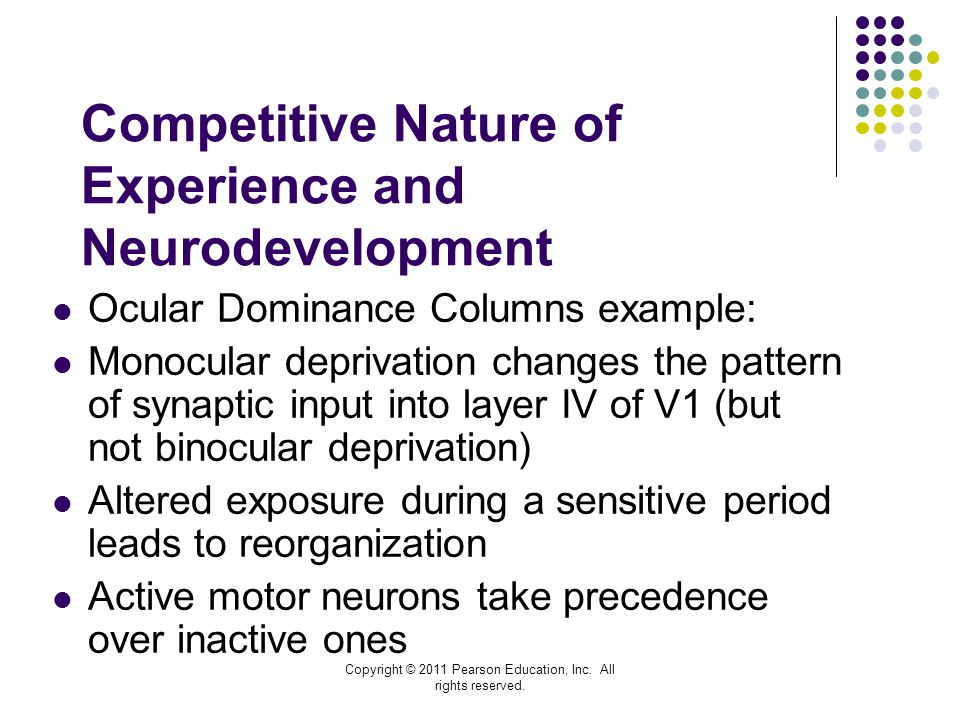Competitive Nature of Experience and Neurodevelopment