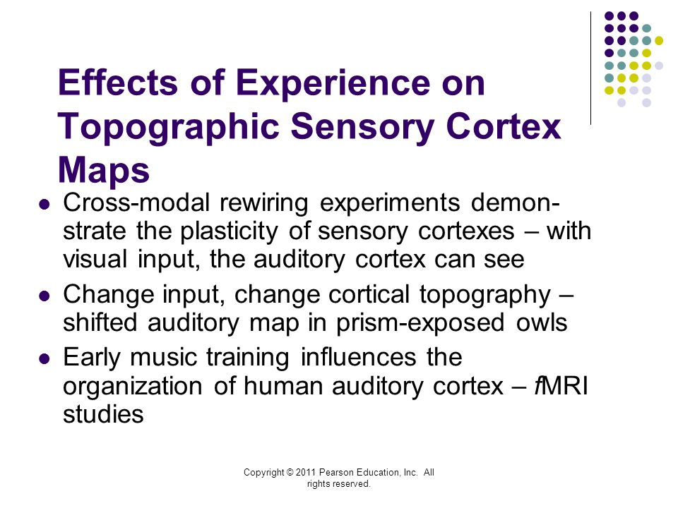 Effects of Experience on Topographic Sensory Cortex Maps