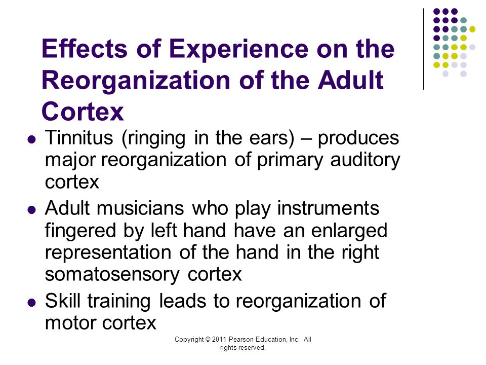 Effects of Experience on the Reorganization of the Adult Cortex