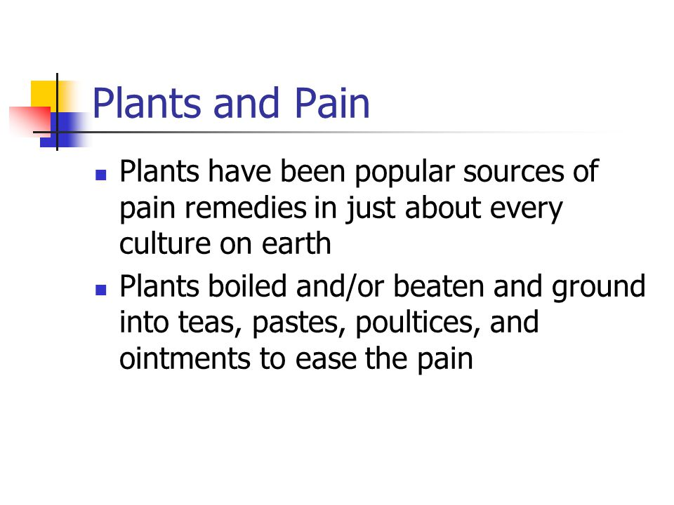 Plants and Pain Plants have been popular sources of pain remedies in just about every culture on earth.