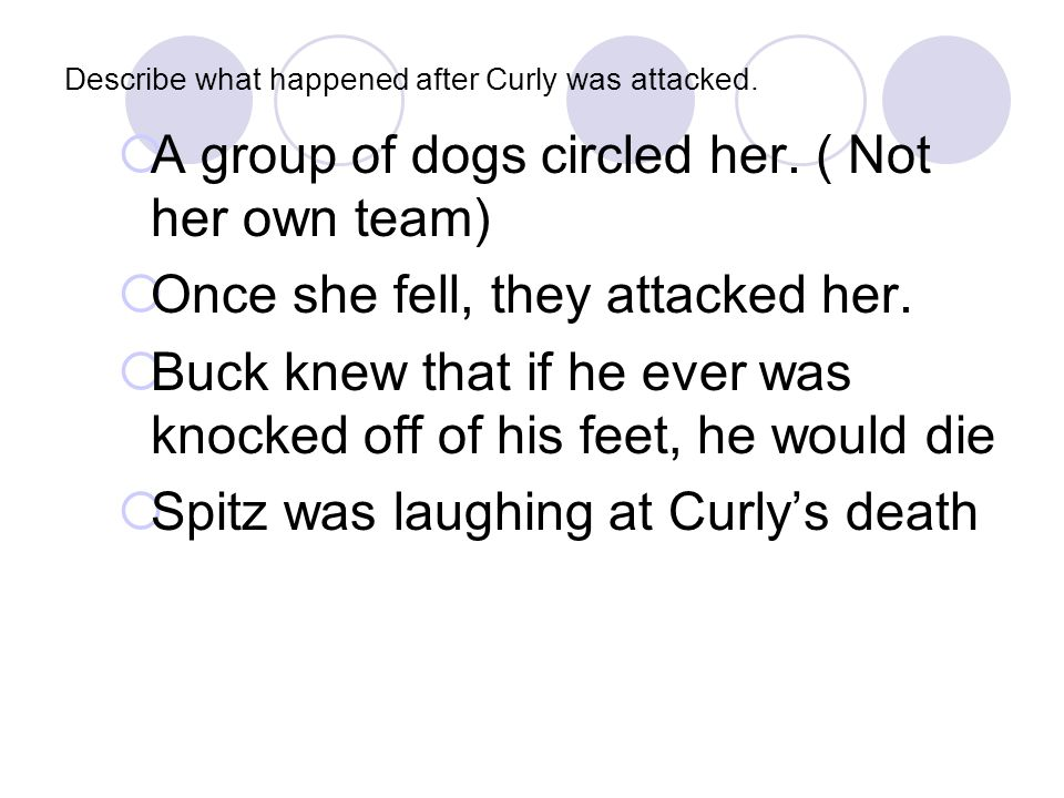 Describe what happened after Curly was attacked.
