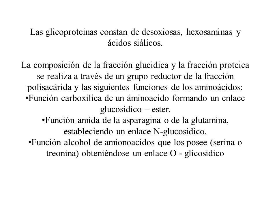 Las glicoproteinas constan de desoxiosas, hexosaminas y ácidos siálicos.