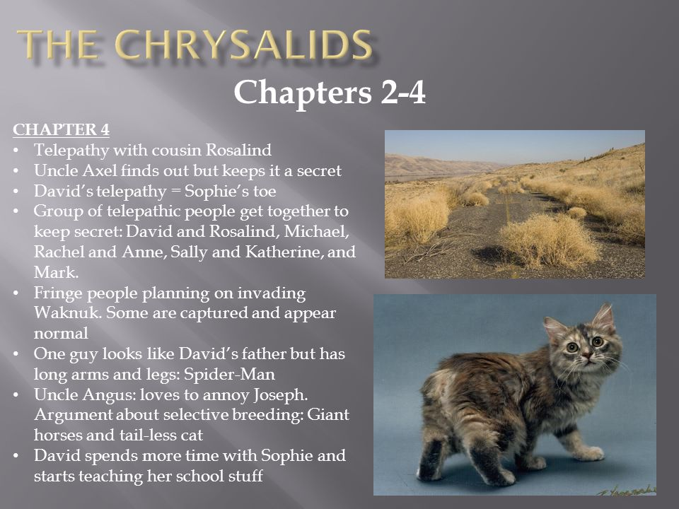 The chrysalids Chapters 2-4 CHAPTER 4 Telepathy with cousin Rosalind