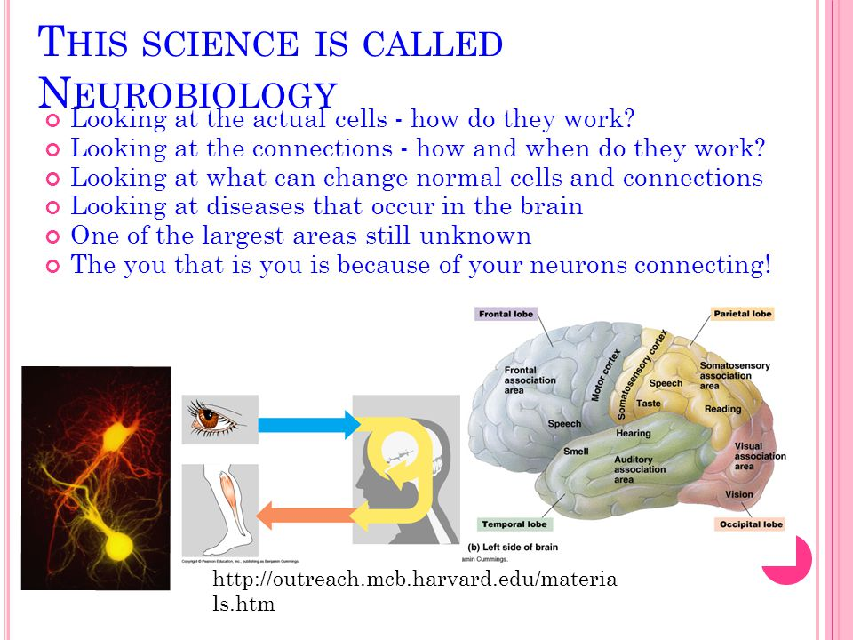 This science is called Neurobiology