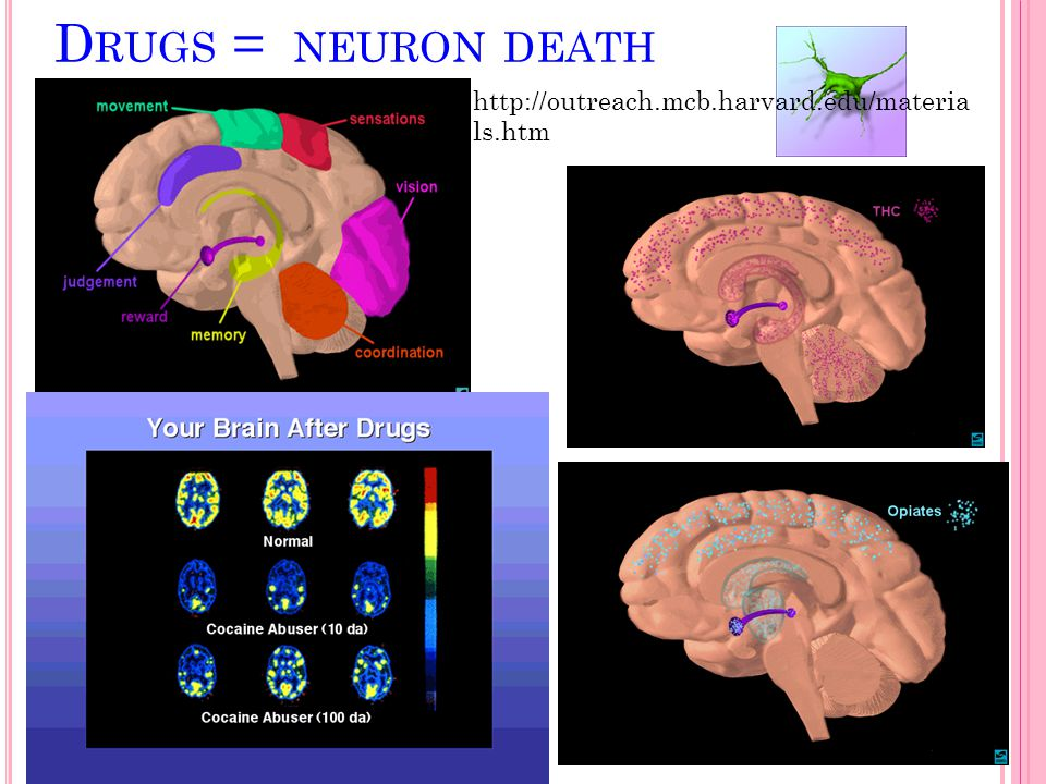 Drugs = neuron death http://outreach.mcb.harvard.edu/materials.htm