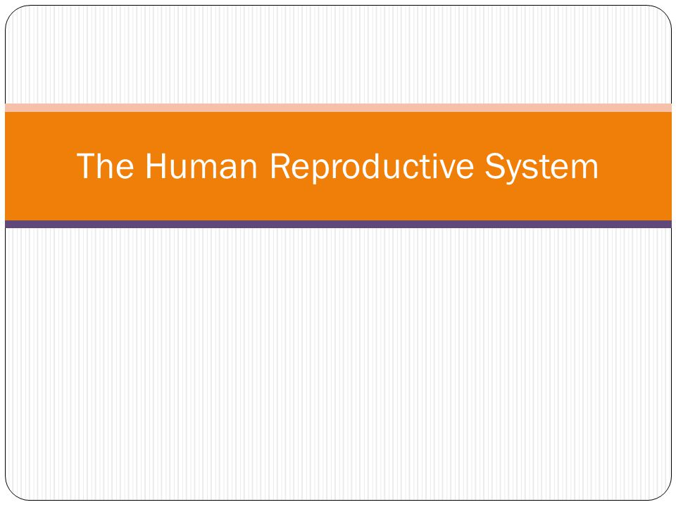 The Human Reproductive System