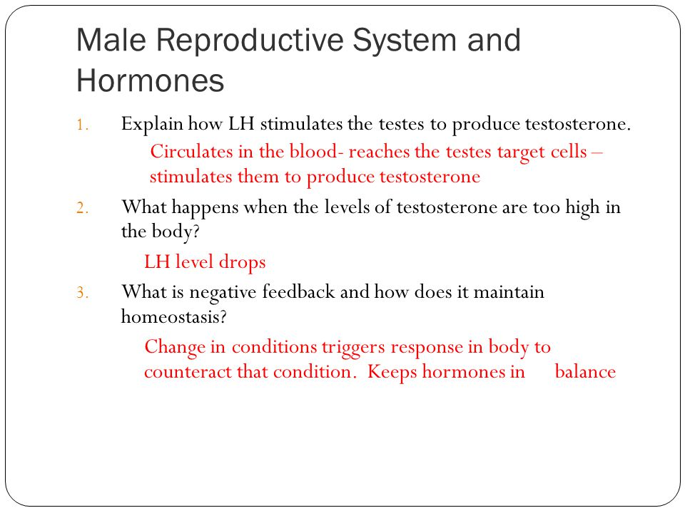 Male Reproductive System and Hormones