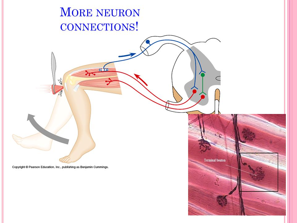 More neuron connections!