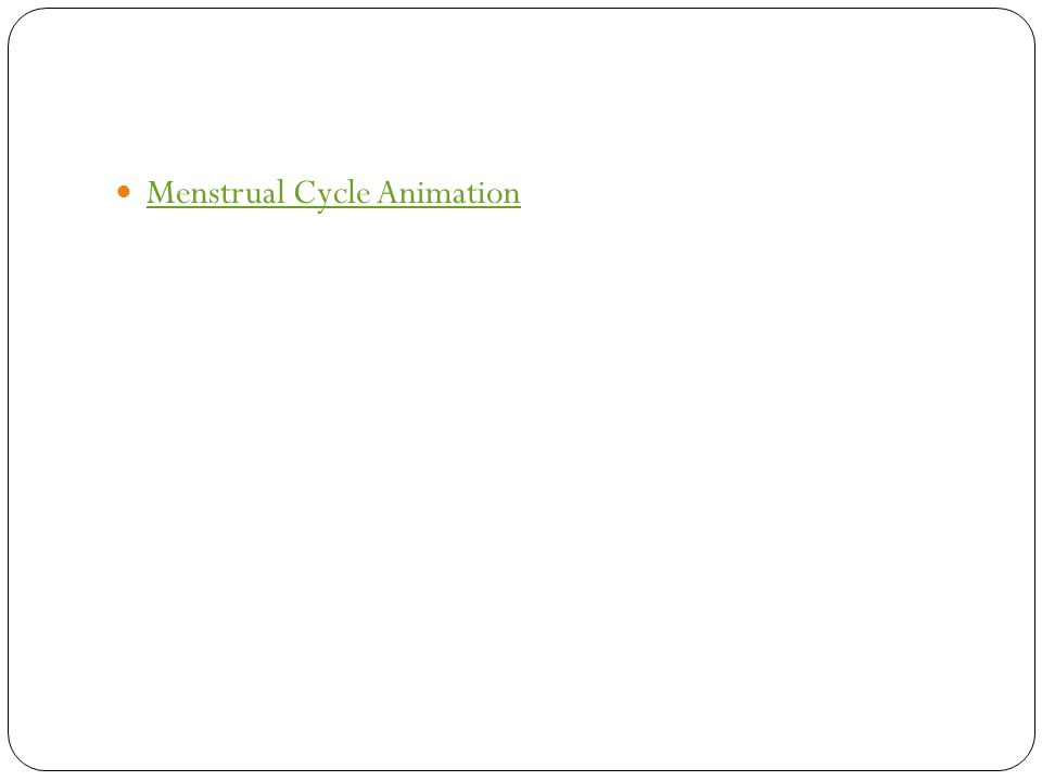 Menstrual Cycle Animation