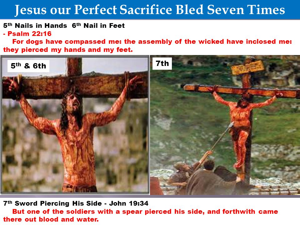Jesus our Perfect Sacrifice Bled Seven Times