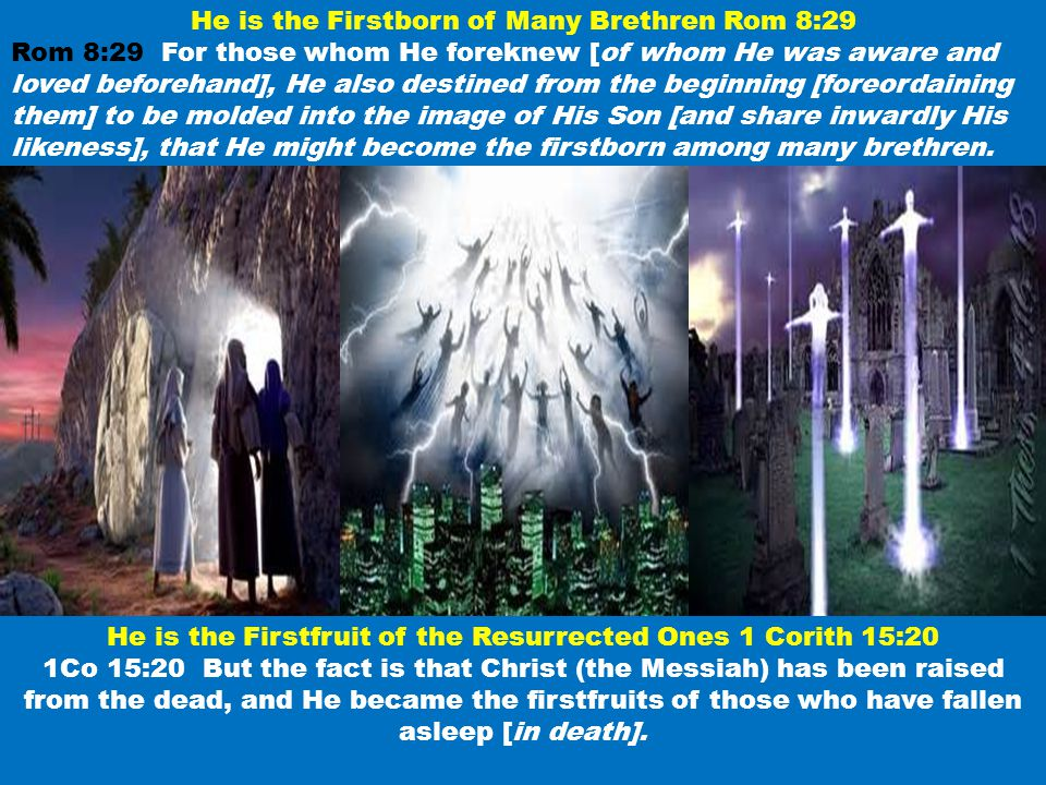 He is the Firstborn of Many Brethren Rom 8:29