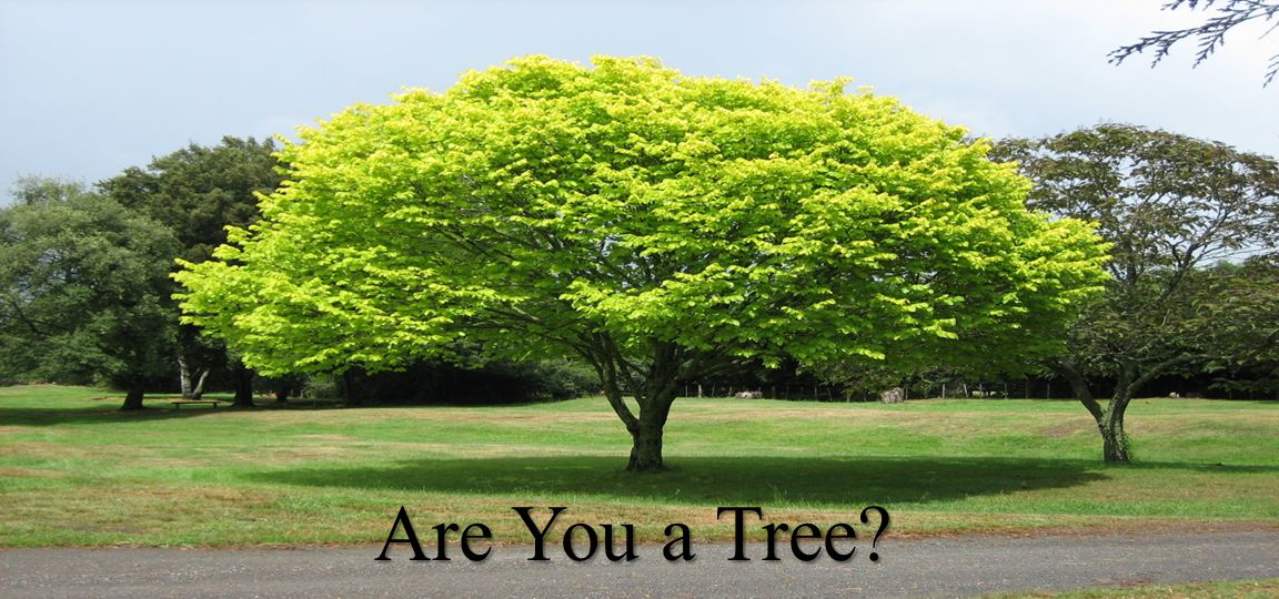 Are You a Tree