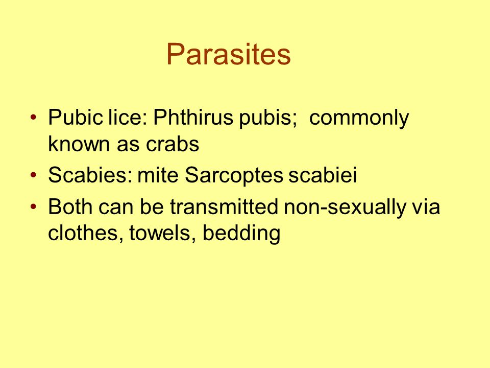 Parasites Pubic lice: Phthirus pubis; commonly known as crabs