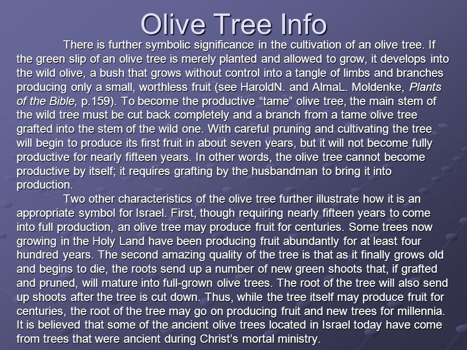 Olive Tree Info