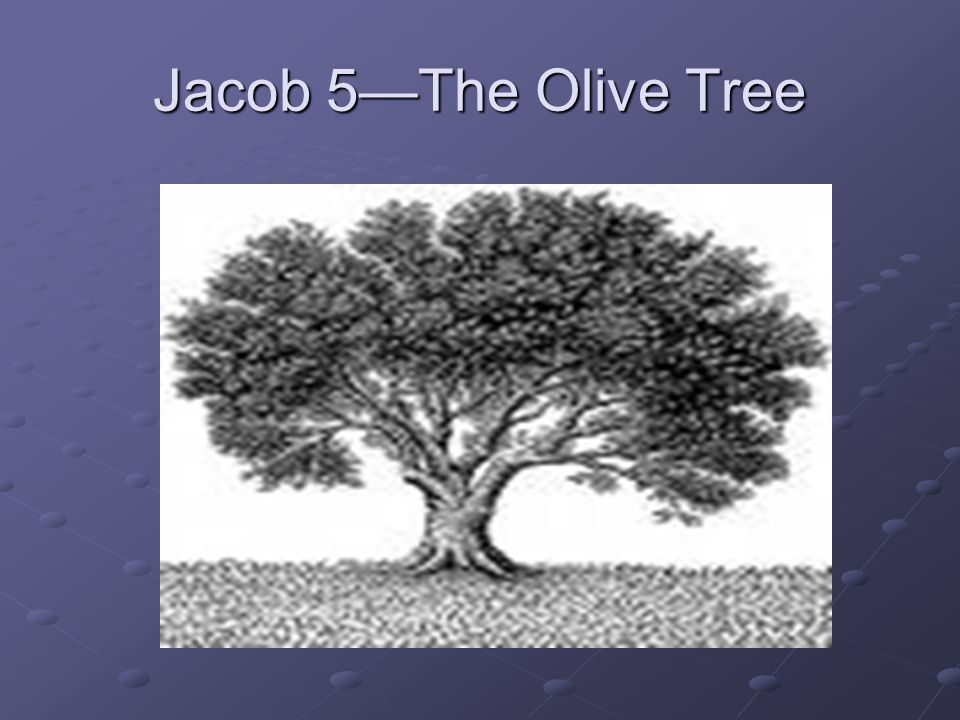 Jacob 5—The Olive Tree