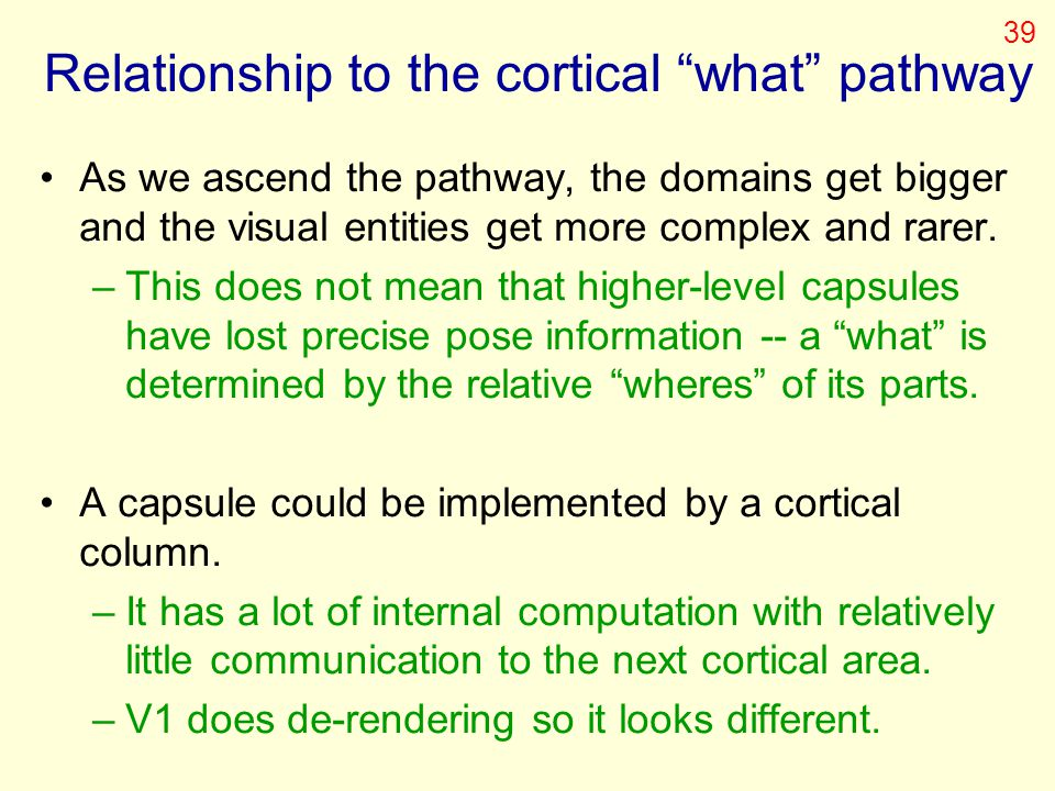 Relationship to the cortical what pathway