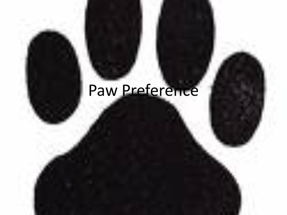 Paw Preference
