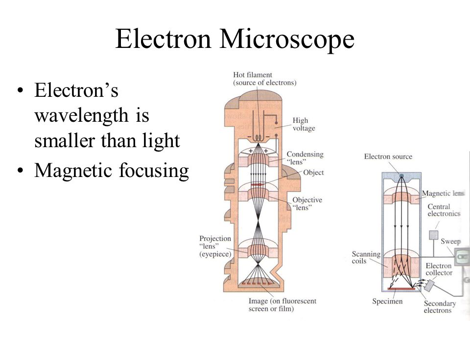 Electron Microscope Electron's wavelength is smaller than light