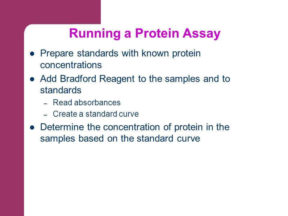 Running a Protein Assay