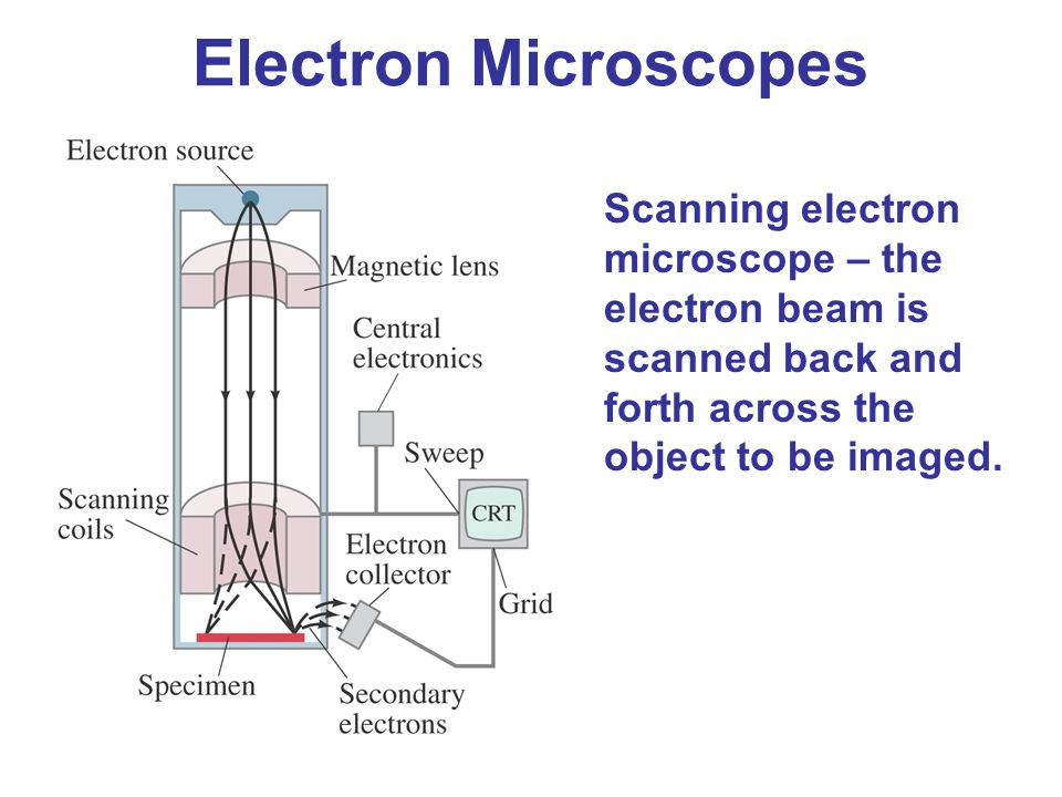 Electron Microscopes Scanning electron microscope – the electron beam is scanned back and forth across the object to be imaged.