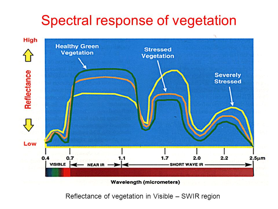 Spectral response of vegetation